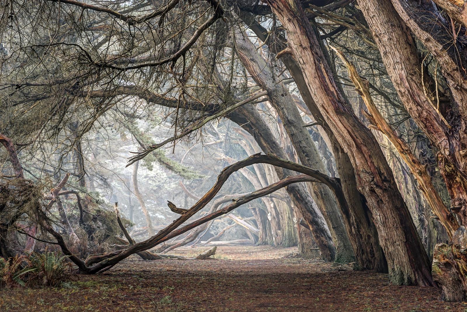 Winter Cypress by Paul Kozal