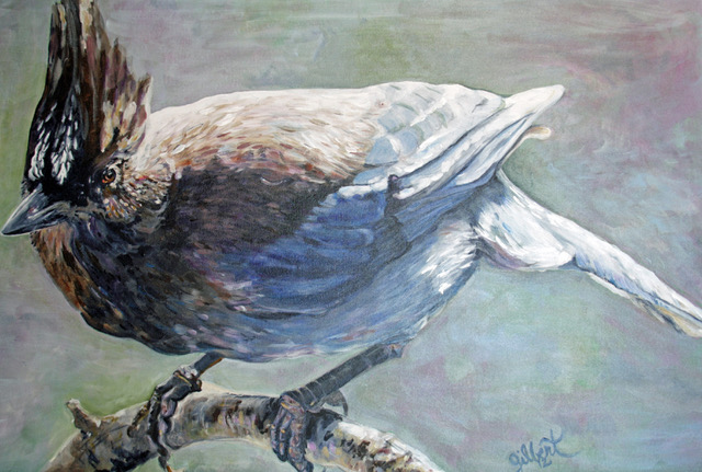 Stellar Jay by Christine Gilbert-Thorburn